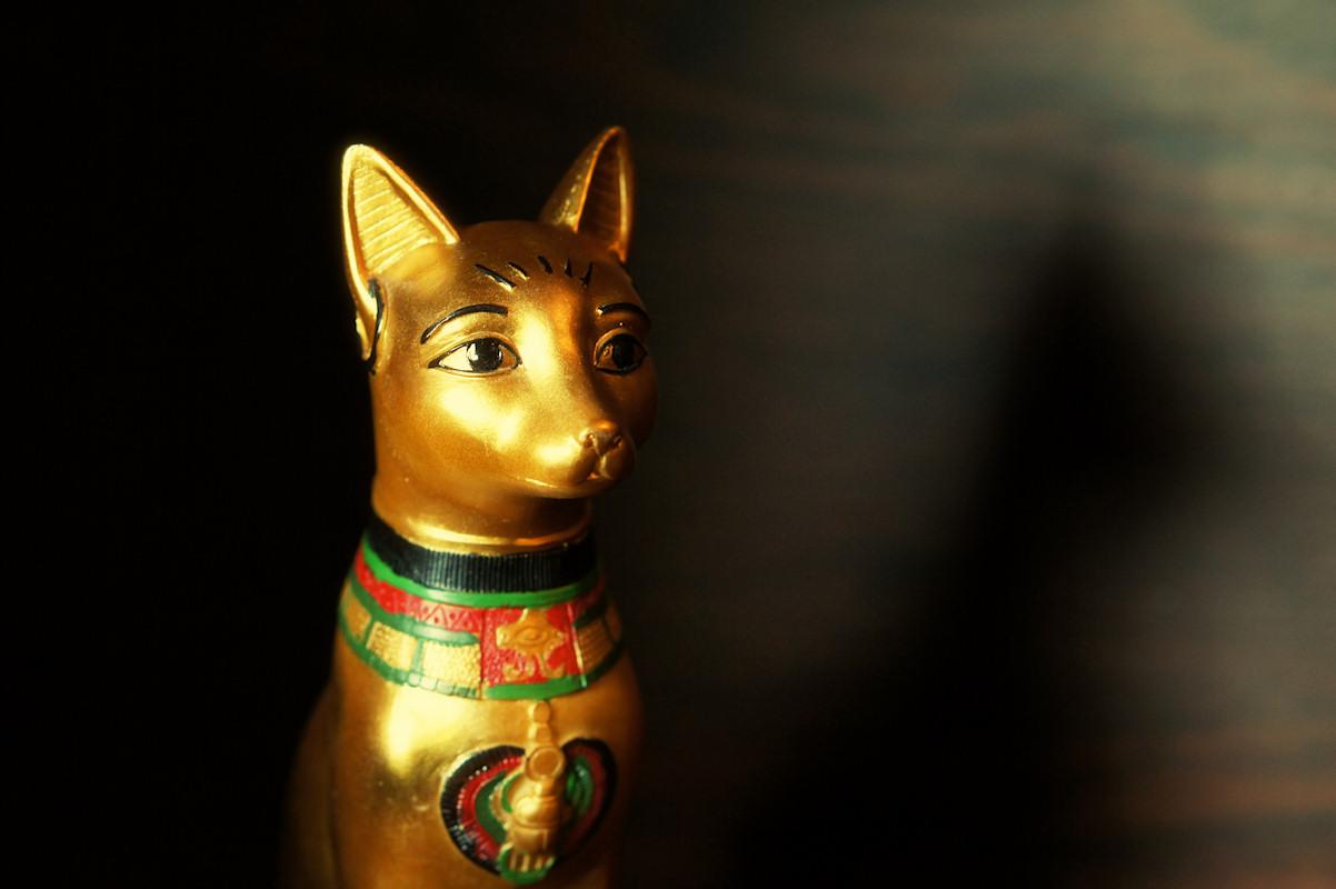 imgchili cat The Egyptian Cat - Viki Secrets