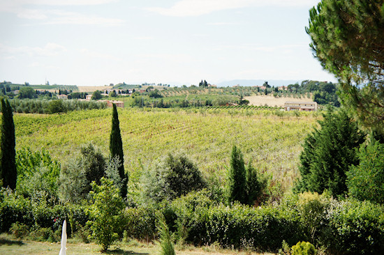 Le Colonie: Vineyards