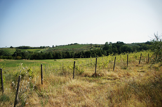 Vineyards near Vinci in Tuscany, Italy