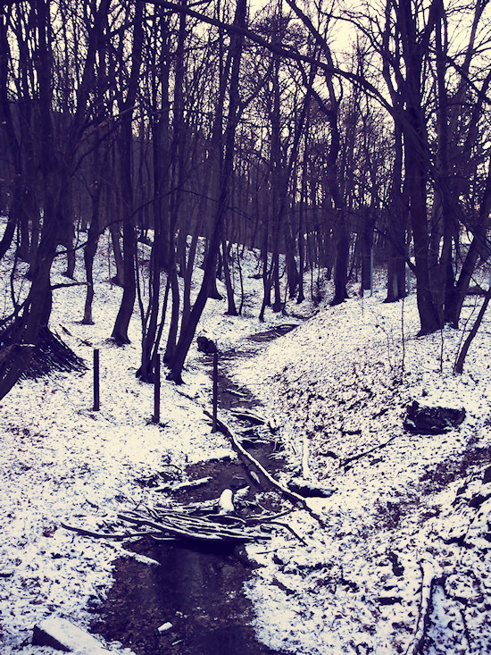 Snow in the Vienna Woods (Wienerwald)