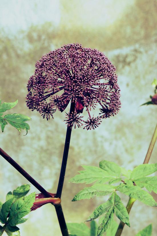 Flower @ Keukenhof
