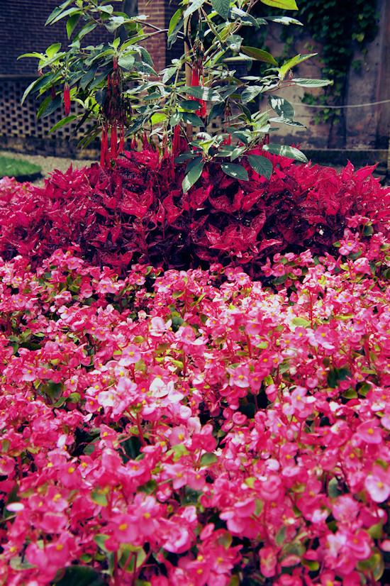 Flowers Keukenhof Castle