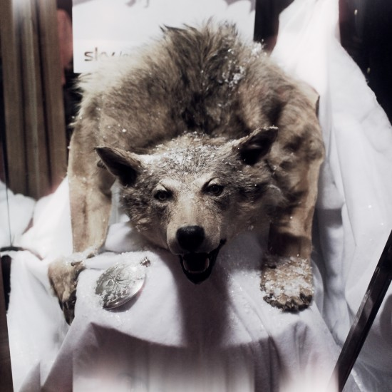 Dire Wolf @ Game of Thrones Sky Night Vienna