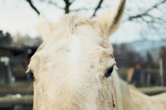 Lady horse Argo, Appaloosa @ Reitstall Putz-Tempelbauer, Rohrbach an der Lafnitz