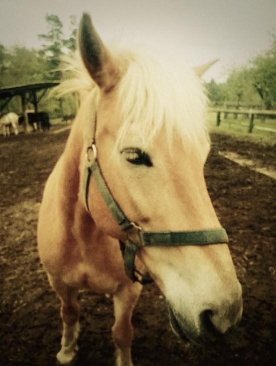 Horse Eyelashes