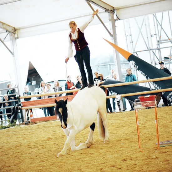 Horse Agility Show with Katharina Schneidhofer and her crazy showhorses @ Apropos Pferd Horse Fair Arena Nova