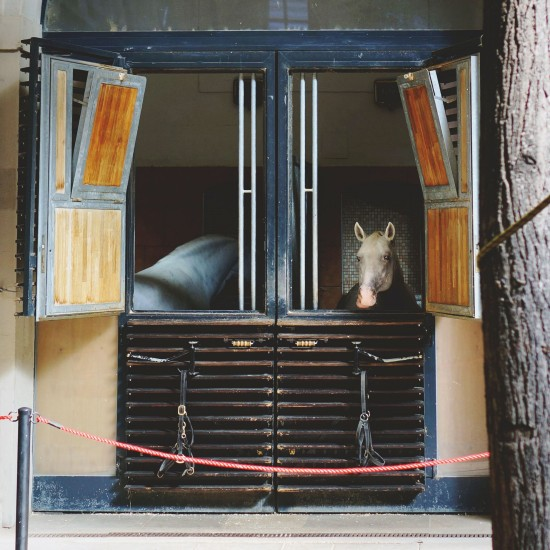 Horses @ Spanish Riding School Vienna