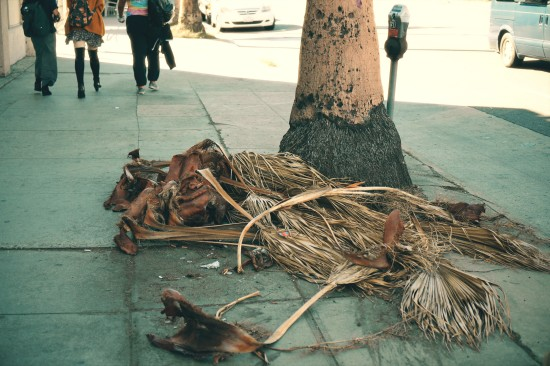 Fallen palm leaves on a sidewalk in Los Angeles, California.