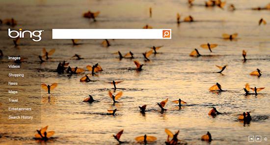 Bing Long-tailed Mayflies